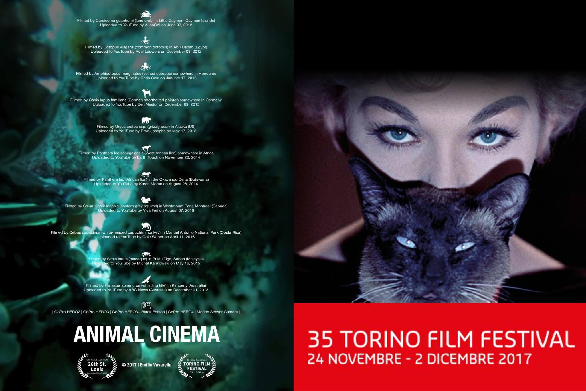 Emilio Vavarella @ Torino Film Festival - TFFdoc